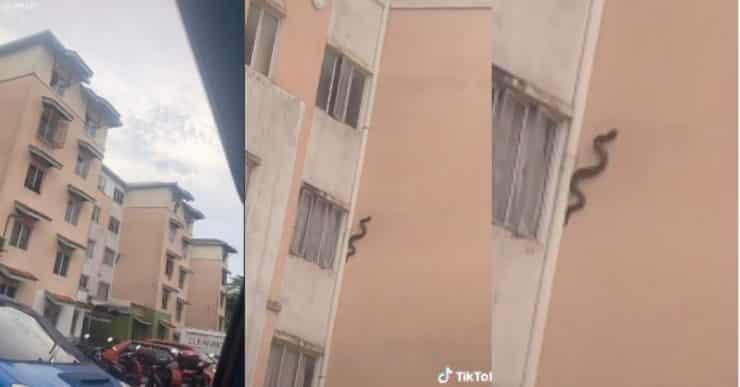 Duduk tingkat atas pun tak selamat, cuak tengok ular 'panjat' dinding apartmen